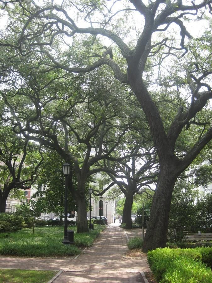Live oaks in Forsyth Park, Savannah