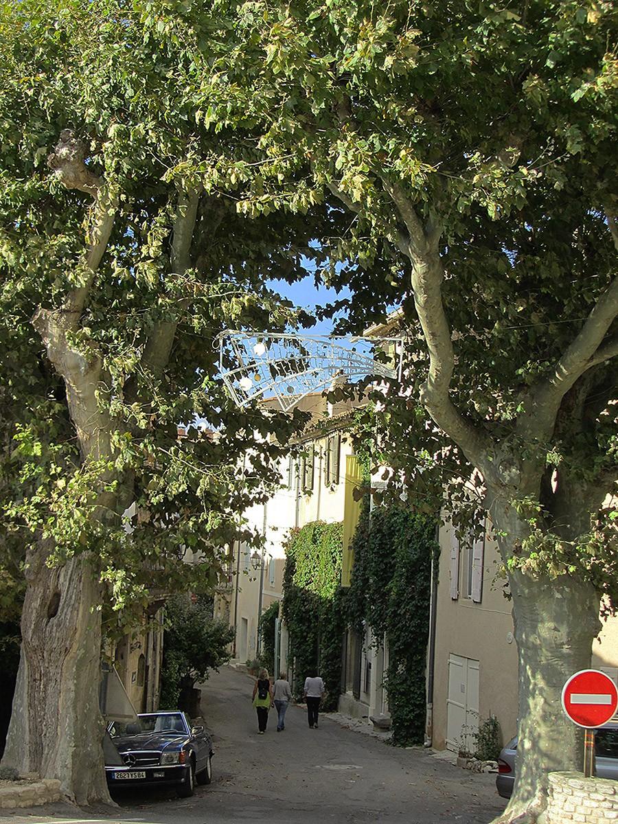 Plane Trees, Saignon, Provence